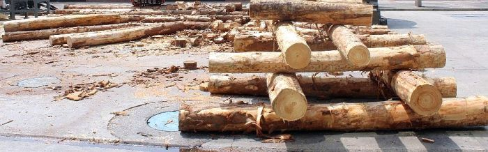Las importación de madera y derivados creció un 4% en  2019
